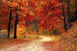 fall-1072821__480